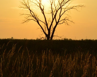 Golden Tree, Landscape Photography, Archival Giclee Print, Nature Photo - Multiple Sizes Available