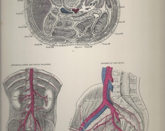 Transverse Sections of the Body,  Anatomical Plate 65, Descriptive Atlas of Anatomy 1880