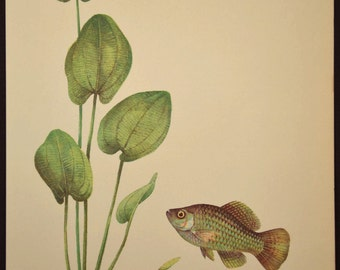 Beach House Decor Tropical Fish Art Wall Decor Aquarium Fish Print Aquatic Plant