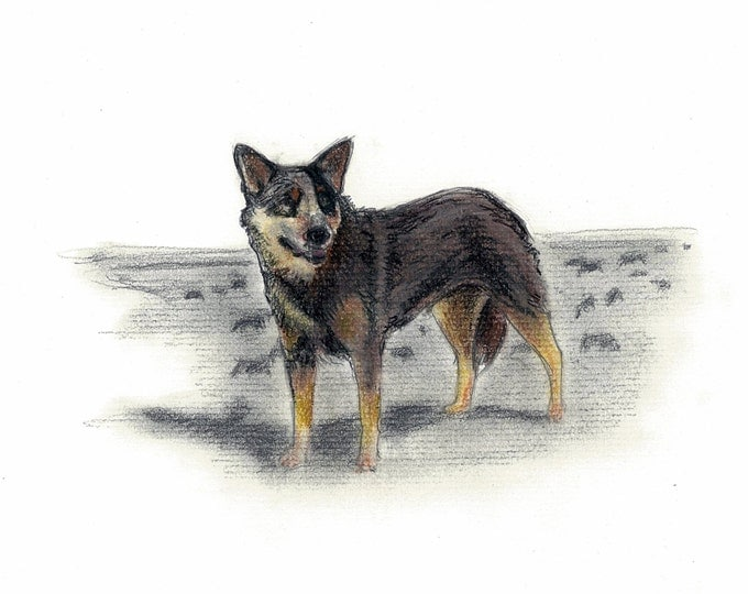 Australian Cattle Dog Vintage Style Print