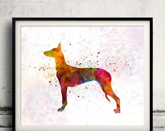Pharaoh Hound 01 in watercolor - Fine Art Print Glicee Poster Decor Home Watercolor Gift Illustration Dog  - SKU 1839
