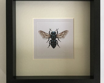 Australian Native Bee Miniature Print x 1