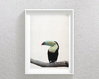 Toucan Print, Tropical Bird, Toucan Art, Tropical Art, Bird Wall Art, Bird Print, Tropical Photography, Jungle Animal Prints, Tropical Decor