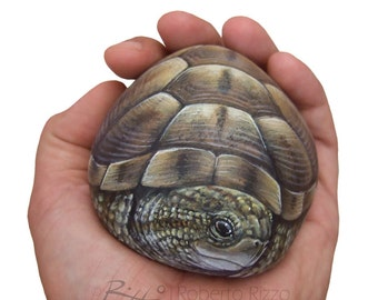 Unique Hand Painted Tortoise | A Wonderful Earth Turtle Painted with Acrylic on a Perfectly Shaped Sea Rock by Roberto Rizzo