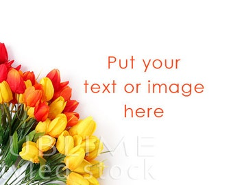 Styled Stock Photography / Spring Styled Background / Stock Image / Flowers / Floral Background / Tulips / Easter / StockStyle-655