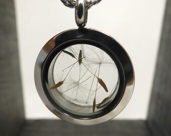 Necklace and her round Locket in glass, seeds flowers of dandelion (egrets), stainless steel