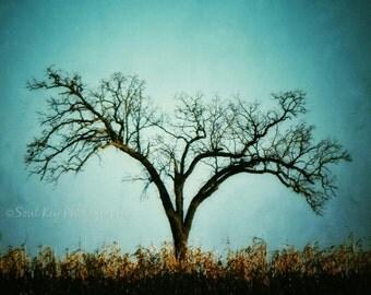 CANVAS ART, Tree Photography, Surreal Trees, Winter Trees, Teal, Aqua, Cornfield, Teal Trees, Aqua Trees, Nature Photography, Unique Trees