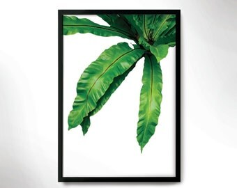 tropical mood poster, green botanical print,pine tree photo, wall decor