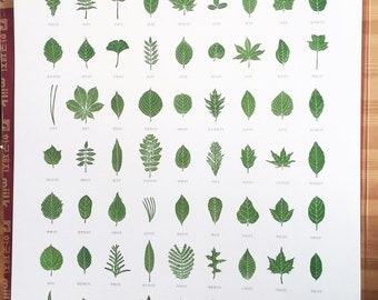 Leaf shapes poster
