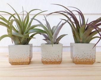 Set of 3 Mini Air Plant Holders   Cube Air Plant Holders   Concrete Mini Pots   Mini Gold Planter   Indoor Plants   Plant Decor
