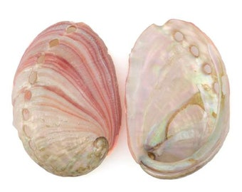Small Red Abalone Shell
