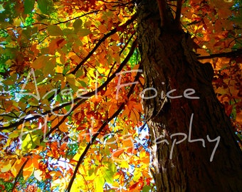 Autumn Tree Photograph