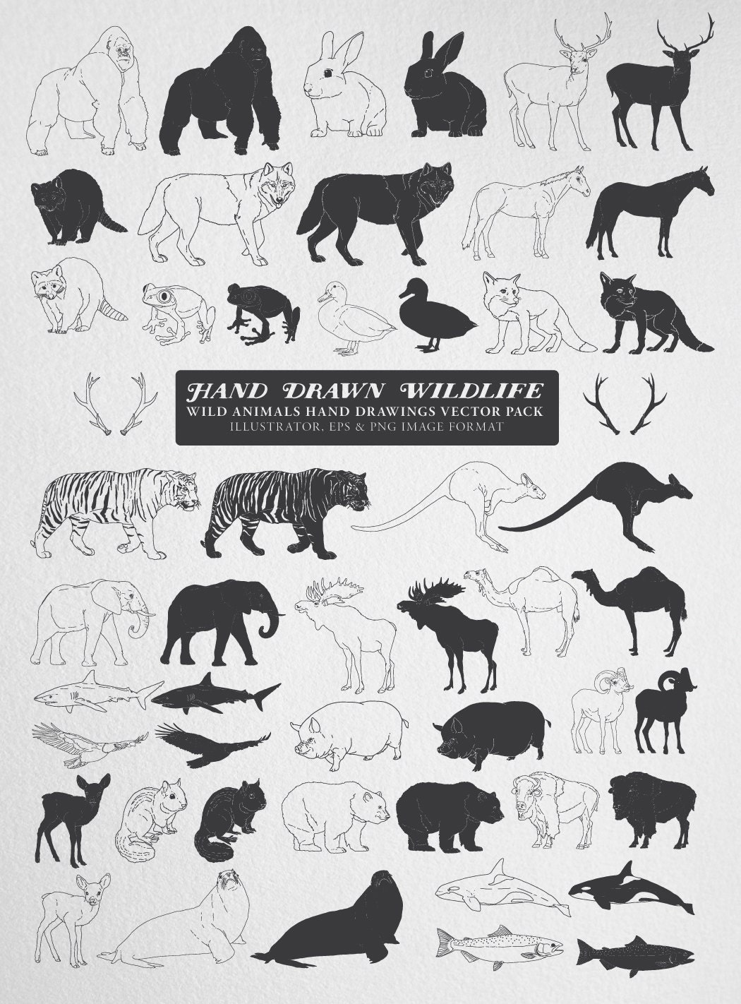 hand drawn animal clipart vector pack hand drawn zoo and wild