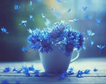 Beautiful blue flower falling petals photography art print