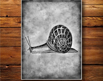 Snail Decor, Cochlea Print, Slug Illustration BW350