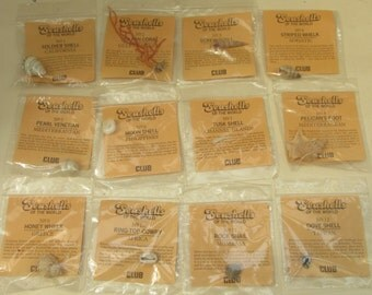A Vintage Collection of Miniature Sea Shells - Club Biscuits Postal Collection
