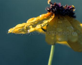 Daisy Macro Wildflower Fine Art Photography