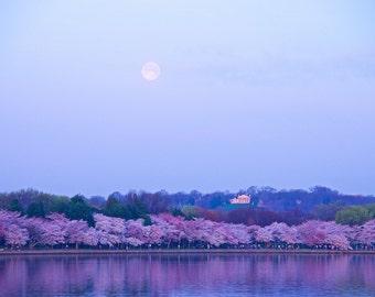 Full Moon/Tidal Basin/Cherry Blossoms in Bloom