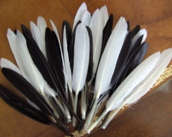 20 Indian black and white feathers