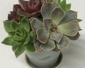 Succulent Arrangement in Ceramic Planter