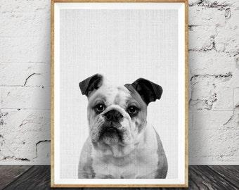English Bulldog Wall Art Print, Printable Bulldog, Dog Photo, Kids Room Gift, Animal Print, Modern Minimal, Large Poster, Instant Download
