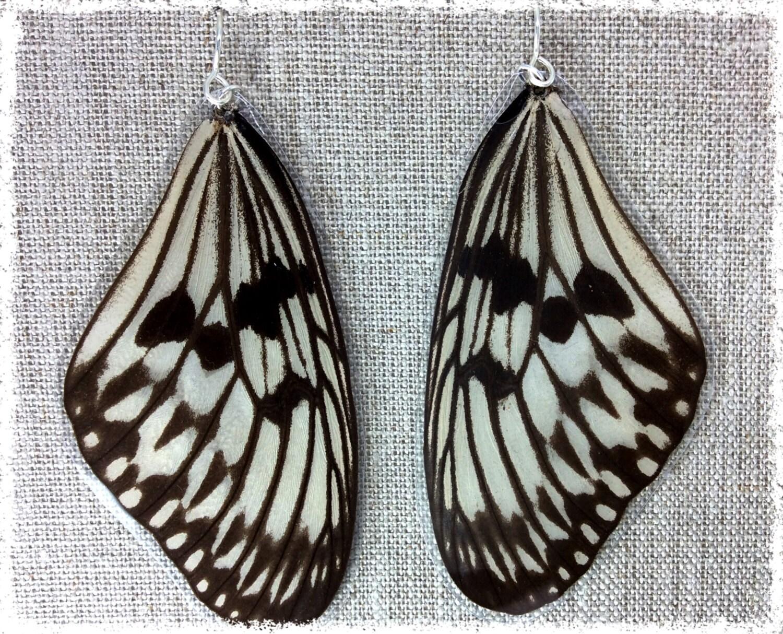 Real Butterfly Wing Earrings Butterfly Wing Jewelry