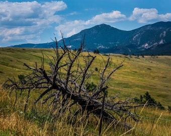 Dead Tree by the mountain