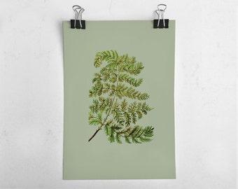 Fern Leaf Print