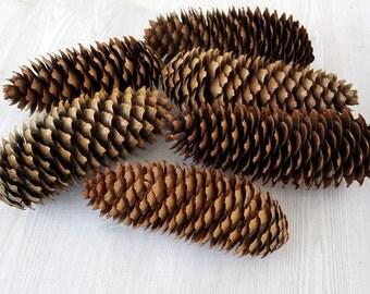 "Real Pinecones Natural Pinecones Organic Pinecones Christmas Decor Rustic Decor Holiday Crafts DIY Wedding Holiday Decor average 4-5.5""x2"""