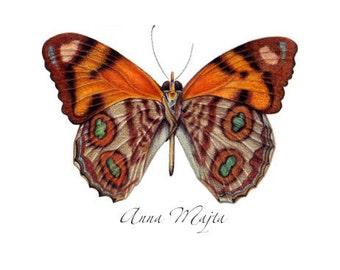 original art - butterfly art - butterfly drawing - A5