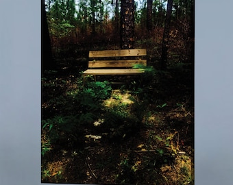 """Bench in the Green Woods Canvas Photography Print 12 x 18"""" Brilliant mounted Florida picture for home"""