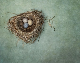 Bird Nest Photograph on a painterly blue background.  Fine Art Photography.