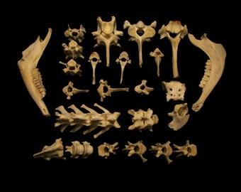 Assorted Goat Bones, Goat Jaws, Goat Vertebra, Goat Spinal Bones, Gothic Decor, Voodoo, Macabre