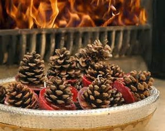 PINECONE FIRE STARTER