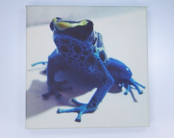 Frog - frogs - original art print on canvas piece in blue poison dart frog Patricia 20 x 20 cm
