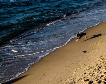 Dog Tel Aviv Fine Art Photography, Frisbee Dog beach, Israel