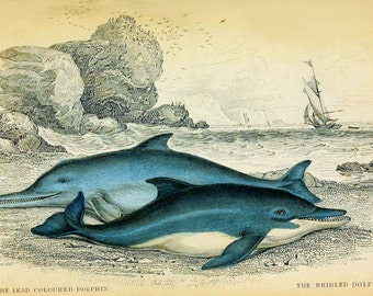 Whales In Sepia Vintage Reproduction Photo Prints No # 17 of 27