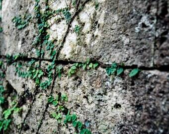 okinawa wall