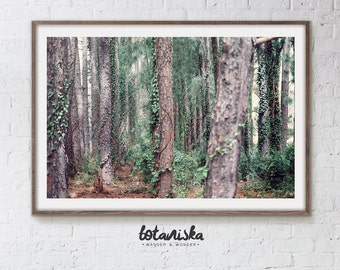 Landscape Photography, Nature Photo, Forest Print, Woodland Photo, Printable Art, Large Art, Nature Wall Art,  Woodland, Fine Art,