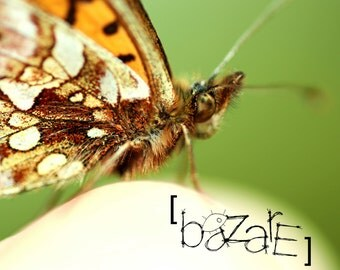 Butterfly, fine art photography, nature photography, butterfly picture, poster, macro photography