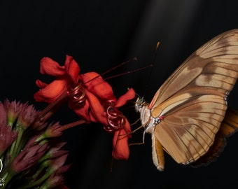 Flame butterfly on tropical flowers A3 print