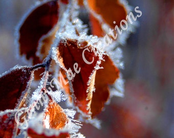 Ice On Leaves - Photography - Print