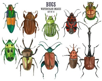 Bugs clip art Watercolor clipart Insect clip art Beetles watercolor