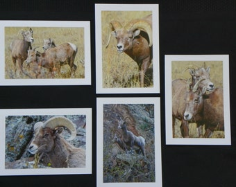 Big Horn Sheep Blank Greeting Cards - Set Of 5 With 4 x 6 Color Photographs