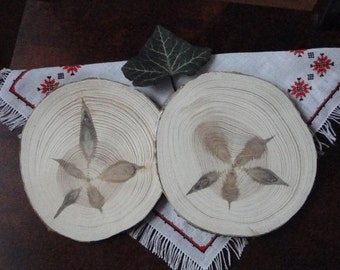 Wood Slices , pine wheels,  tree slices