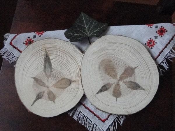 tranches de bois roues de pin tranches d 39 arbre. Black Bedroom Furniture Sets. Home Design Ideas