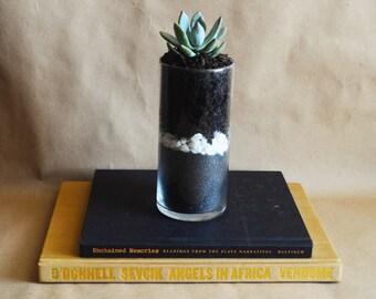 Live succulent terrarium