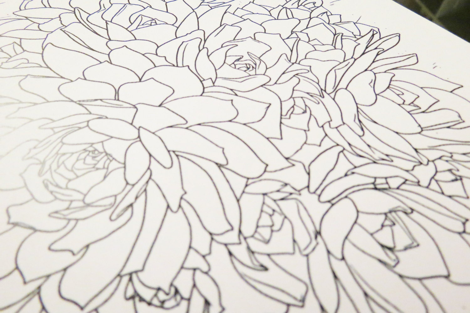 The botany coloring book pdf - Gallery Photo Gallery Photo Gallery Photo
