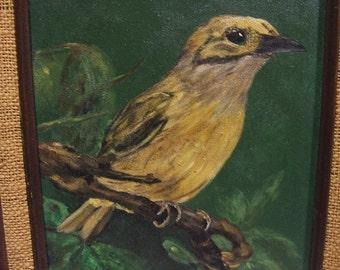 Nice beatnik yellow bird