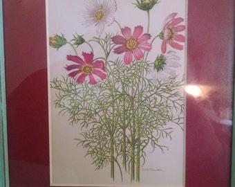 Botanical print, picture, Cosmos, Cosmo, vintage flower print, 1920 print,garden print, botanical flower, shabby chic, flower, garden flower